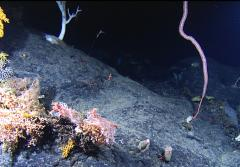 A variety of corals cling to Manning Seamount, just off the coast of Cape Cod, Massachusetts.