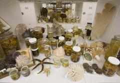 A few corals are part of this small sampling of the approximately 35 million specimens represented in the invertebrate zoology collection housed at the National Museum of Natural History.