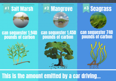 An infographic explaining carbon sequestration