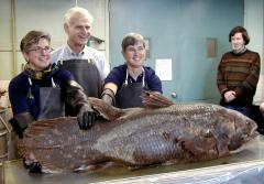 a coelacanth specimen and Smithsonian scientists