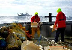 Scientists on a ship toss drifters overboard
