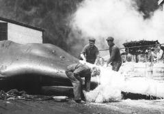 A worker mixes plaster near a dead whale