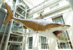 a life size model of a megalodon