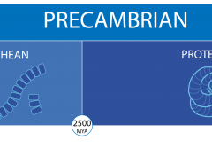 a timeline of the precambrian