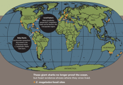 A map of where megalodons lived