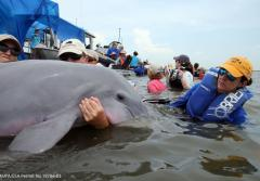 veterinarians hold a dolphin