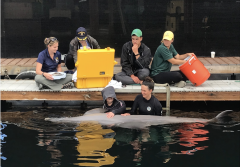 two veterinarians listen to a dolphins heart next to a dock