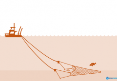 a graphic of a boat towing a trawl