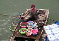 Fresh Shellfish for Sale in Vietnam