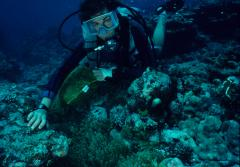 Dr. Valerie Paul, director of the Smithsonian Marine Station at Fort Pierce, Fla., examines tropical seaweeds on northwestern Guam's coral reefs.