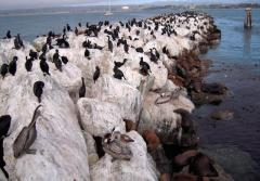 Seabirds on a rocky outcrop.