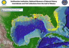 This map shows the localities represented by the Gulf of Mexico collection of the Smithsonian Institution's National Museum of Natural History.