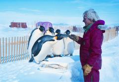 Marine biologist Gerald Kooyman of the Scripps Institution of Oceanography has documented climate-induced changes to emperor penguin habitats and impacts on how the penguins feed, breed, and raise their young.