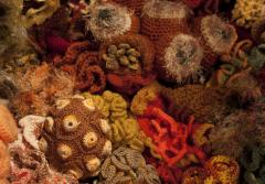 Detail of The Smithsonian Community Crochet Reef