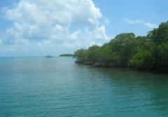 Coastal mangroves along the edge of the ocean.