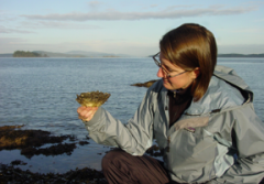 Melissa Frey, Encyclopedia of Life (EOL) Rubenstein Fellow, examines a Pacific oyster (Crassostrea gigas) on a chilly day in Sidney, British Columbia. In addition to holding an EOL Fellowship, Melissa is a Research Associate at the Royal BC Museum, where she continues to engage in taxonomic studies.
