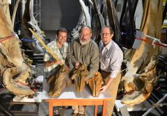 Smithsonian researchers with fossil whale skulls from the group Monodontidae