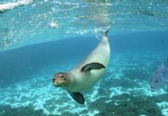 Hawaiian monk seals are among the wildlife found within the Papahānaumokuākea World Heritage Site.