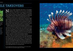 Photo Spread with lionfish from Citizens of the Sea