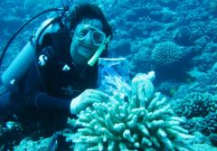 Chris Meyer takes his nephew's friend, Flat Stanley, for a dive in Moorea.