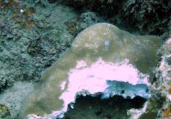 Acidic waters are also able to completely dissolve coral skeletons.