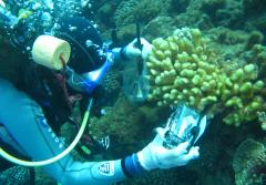A diver on the reef near Moorea collects samples.