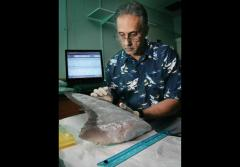 A geneticist samples shark DNA