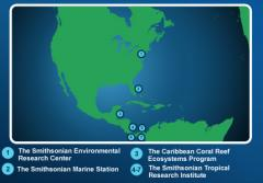 These Smithsonian field stations enable scientists worldwide to conduct long-term studies on mangrove ecosystems.