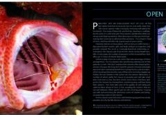 Photo Spread showing a shrimp cleaning a fishes mouth from Citizens of the Sea