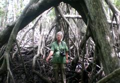 Dr. Candy Feller is framed by the roots of a mangrove tree on Panama's Pacific coast.