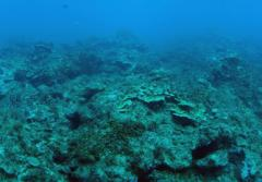 Overfishing and sedimentation have heavily impacted this reef off the coast of Guam.