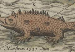 A sea pig illustration on an old map