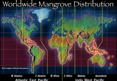 A map showing the global range of mangroves.