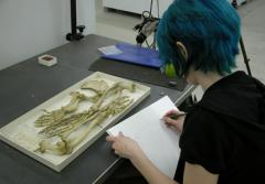 An artist sketches the preserved bones of a specimen in the Smithsonian's collection.