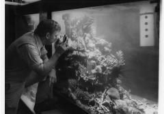 Walter Adey and the NMNH coral reef tank