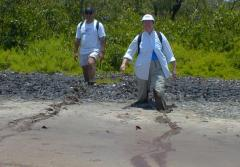 Anne Chamberlain and Marc Frischer stride through a mangrove pond at Twin Cays, Belize.