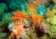 Orange and red deep-sea corals.