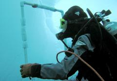 Ice divers study the abundance of marine life.