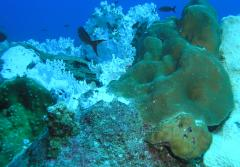 These bleached corals in the Gulf of Mexico are the result of increased water temperatures.
