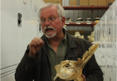 Charley Potter, Marine Mammals Collection Manager, holding a dolphin skull at the Museum Support Center. The Smithsonian National Museum of Natural History houses a collection of hundreds of whale earwax plugs.