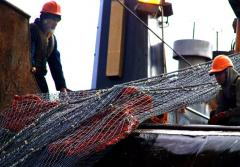 A net used to trawl the ocean floor scooped up this large specimen of deep-sea coral.