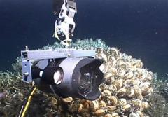 Lights attached to this deep-sea camera system enable scientists to capture detailed images of deep-sea corals in otherwise dark water.