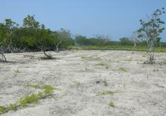 This mangrove island in Belize was cleared and dredged to create sand beaches.