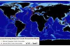 This map shows where some of the most significant species of deep-sea corals are located.