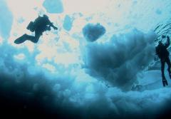Divers deep into the cold waters beneath the ice.