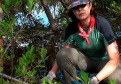 Dr. Karen L. McKee collects a peat core in a mangrove forest in Belize.