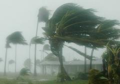 Palm trees bend in hurricane strength wind