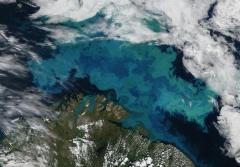 The bright, brilliant swirls of blue and green seen from space are a phytoplankton bloom in the Barents Sea.