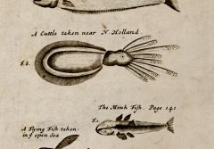 Pirate William Dampier's shipboard artist carefully recorded the species that Dampier found new and unusual.