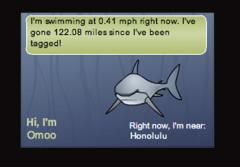 Follow Omoo, a Great White Shark, at she swims across the Pacific.